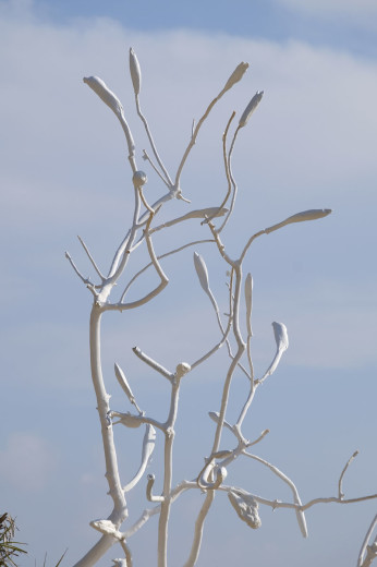 Boccioli con ramo